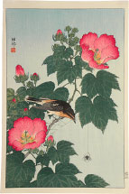 Ohara Koson Fly-catcher on Rose Mallow Watching Spider