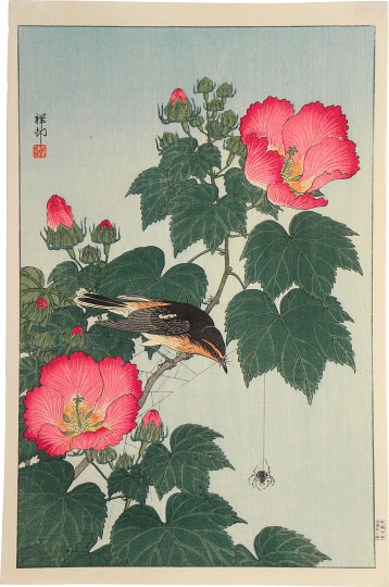 Ohara Koson, Fly-catcher on Rose Mallow Watching Spider