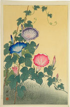 Ohara Koson Morning Glory in Full Bloom