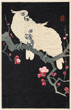 Ohara Koson Two Cockatoo on a Branch of Blossoming Plum