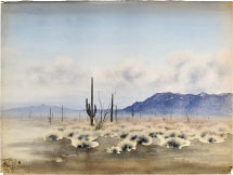 Kakunen Tsuruoka untitled (cacti and sage brush)