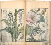 attributed to Kono Bairei Album of Watercolors related to 'One Thousand Kind…